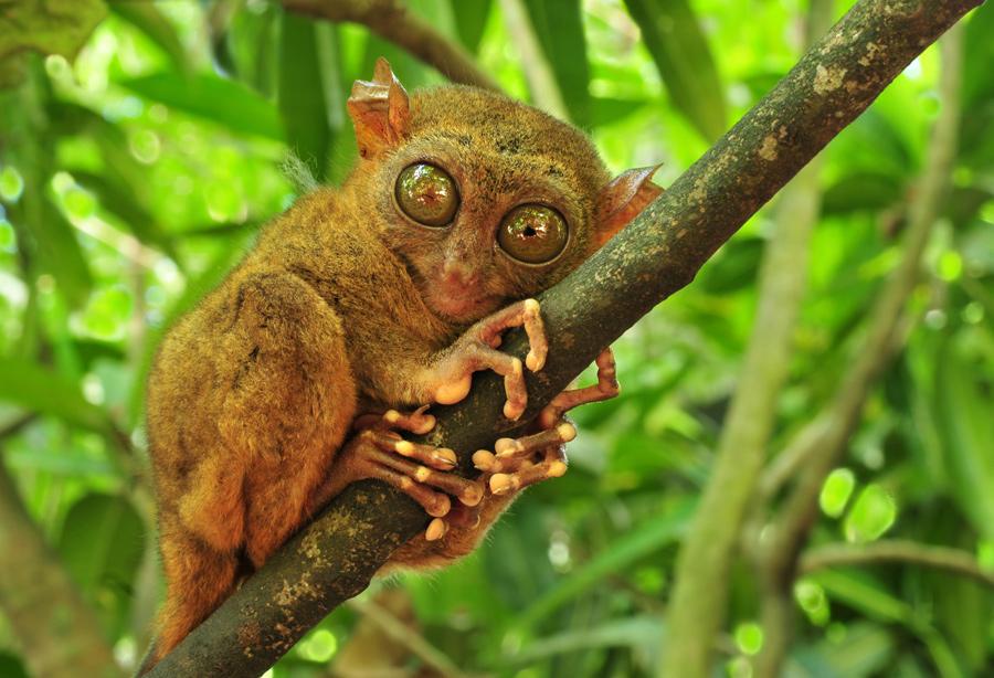תמונה של קופיף